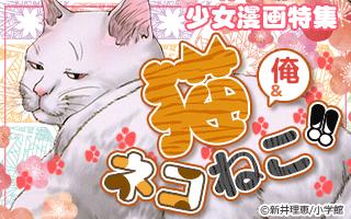 猫(と俺)