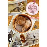 ほっこり猫ライフ vol.4 子猫編