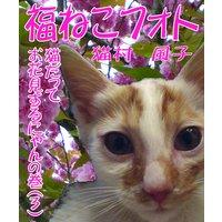 福ねこフォト〜プニプニ猫にゃん(3) 猫だってお花見するにゃんの巻